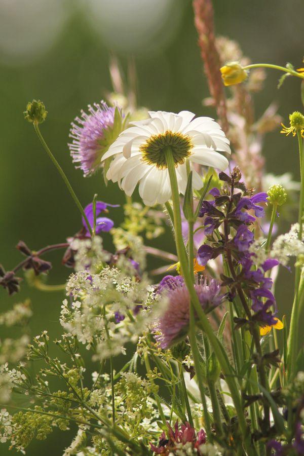 Swiss Wildflowers thumbnail
