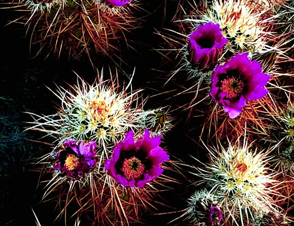 Oceaen Cacti thumbnail