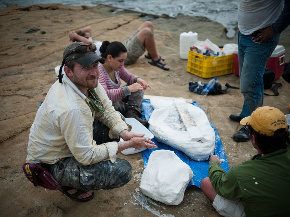 Scientists from the Smithsonian's National Museum of Natural History (including Nick Pyenson, left) and the Smithsonian Tropical Research Institute collect a fossil dolphin from the Caribbean coast of Panama. The fossil is encased in a white plaster jacket, and recovered as the tide rushed in. © Aaron O'Dea / Smithsonian Institution