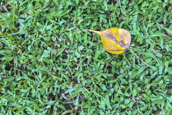 Dry leaf in playground. thumbnail