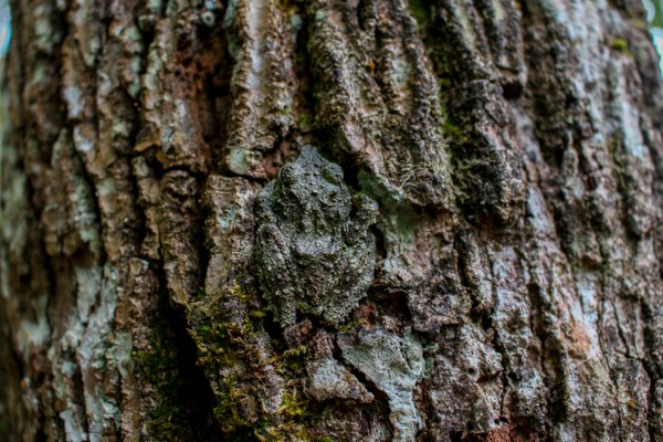 Hidden Frog thumbnail