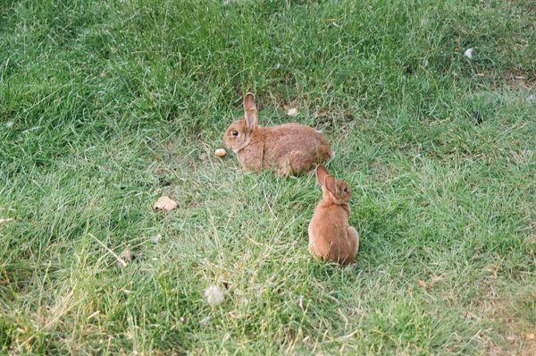 rabbits thumbnail