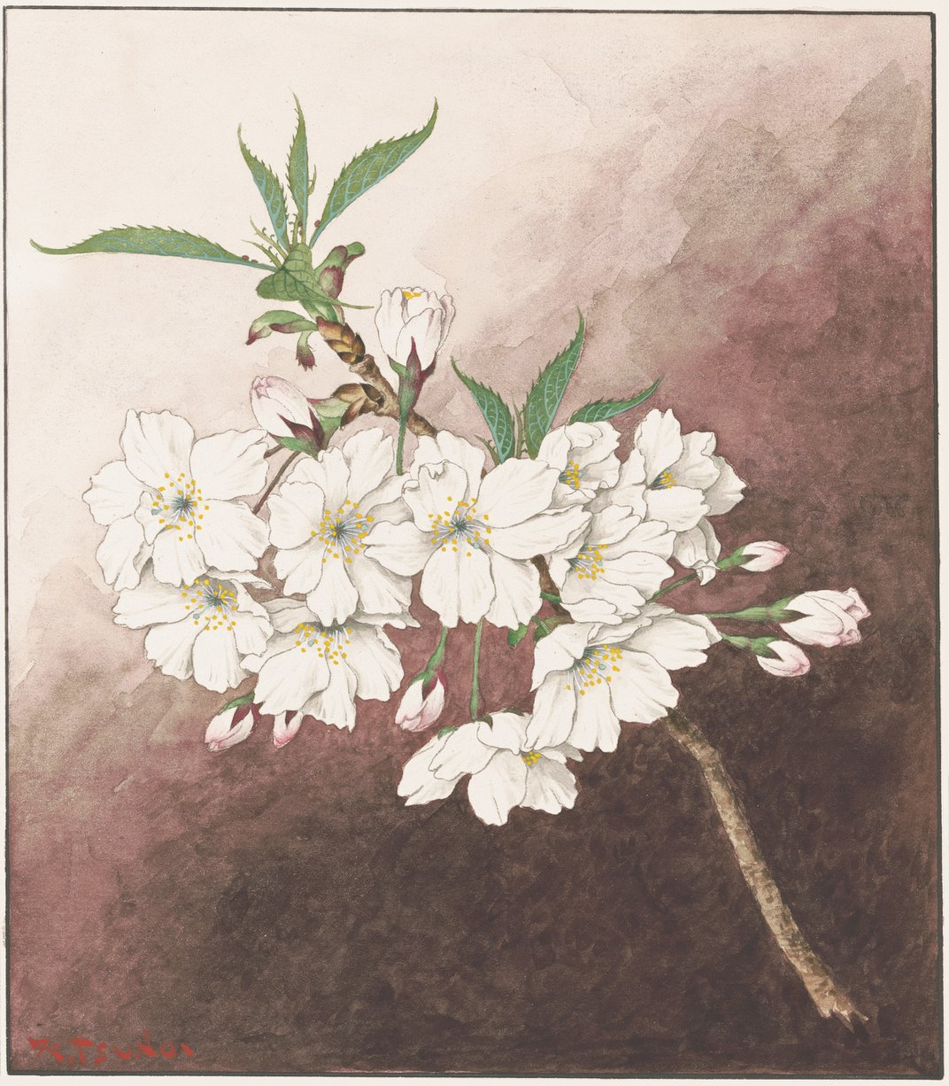 Not All Cherry Blossoms Are the Same