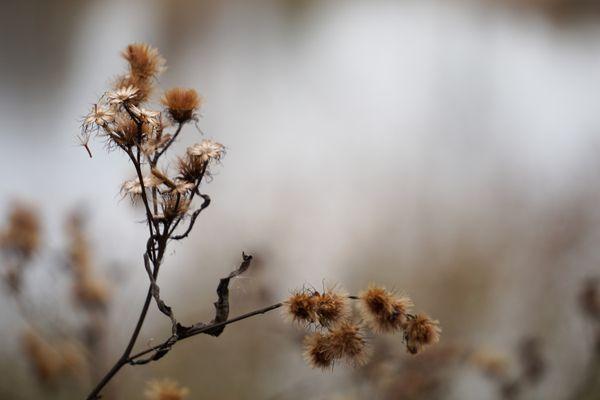 Autumn in the Marsh thumbnail