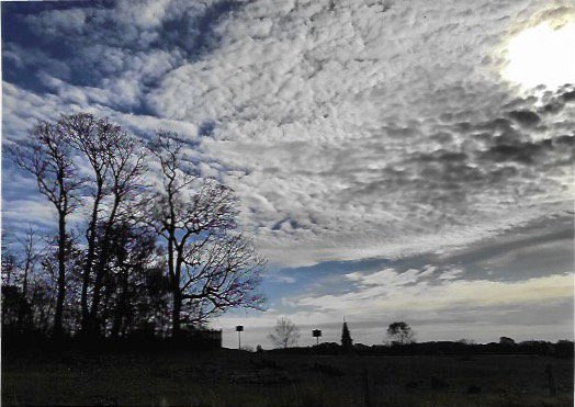 Gettysburg/ copse of trees thumbnail