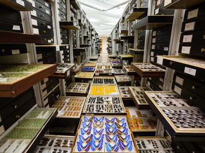 The National Museum of Natural History's 146 million objects and specimens are studied by researchers worldwide who are looking to understand all aspects of the natural world.