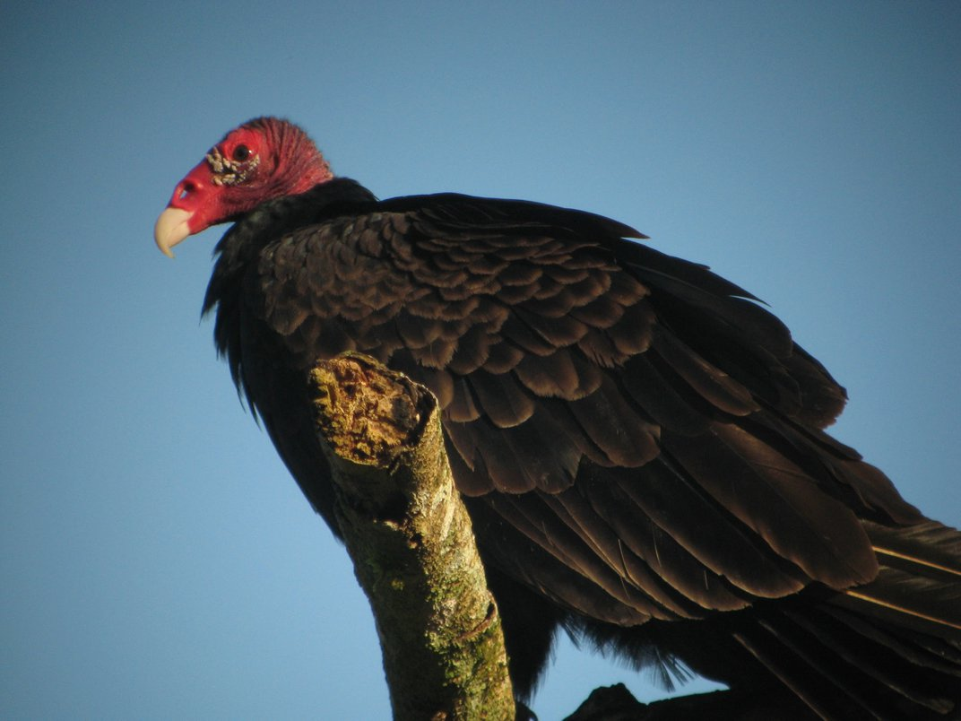 A black and red bird perched on a branch.