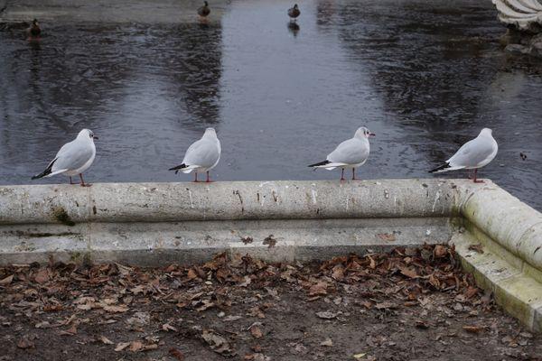 Four seagulls thumbnail