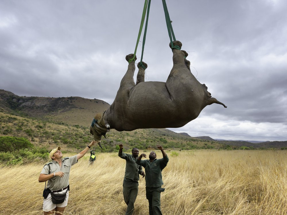 black Rhinos expansion project