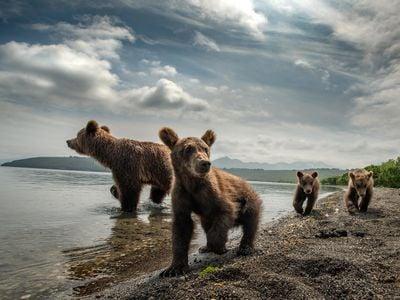 Bear Family of Kamchatka