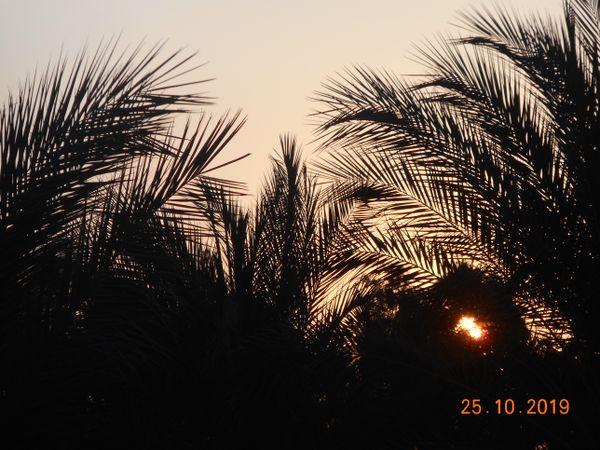 Sunrise behind palm-trees. thumbnail