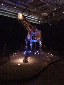 20110520083155einstein-apatosaurus-225x300.jpg