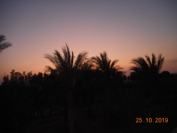 Palm trees right before sunrise. thumbnail