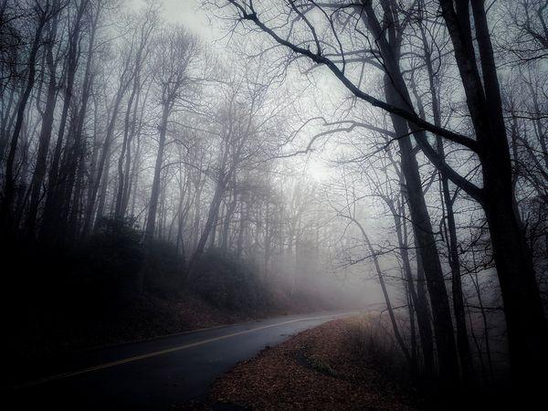 Foggy Road thumbnail