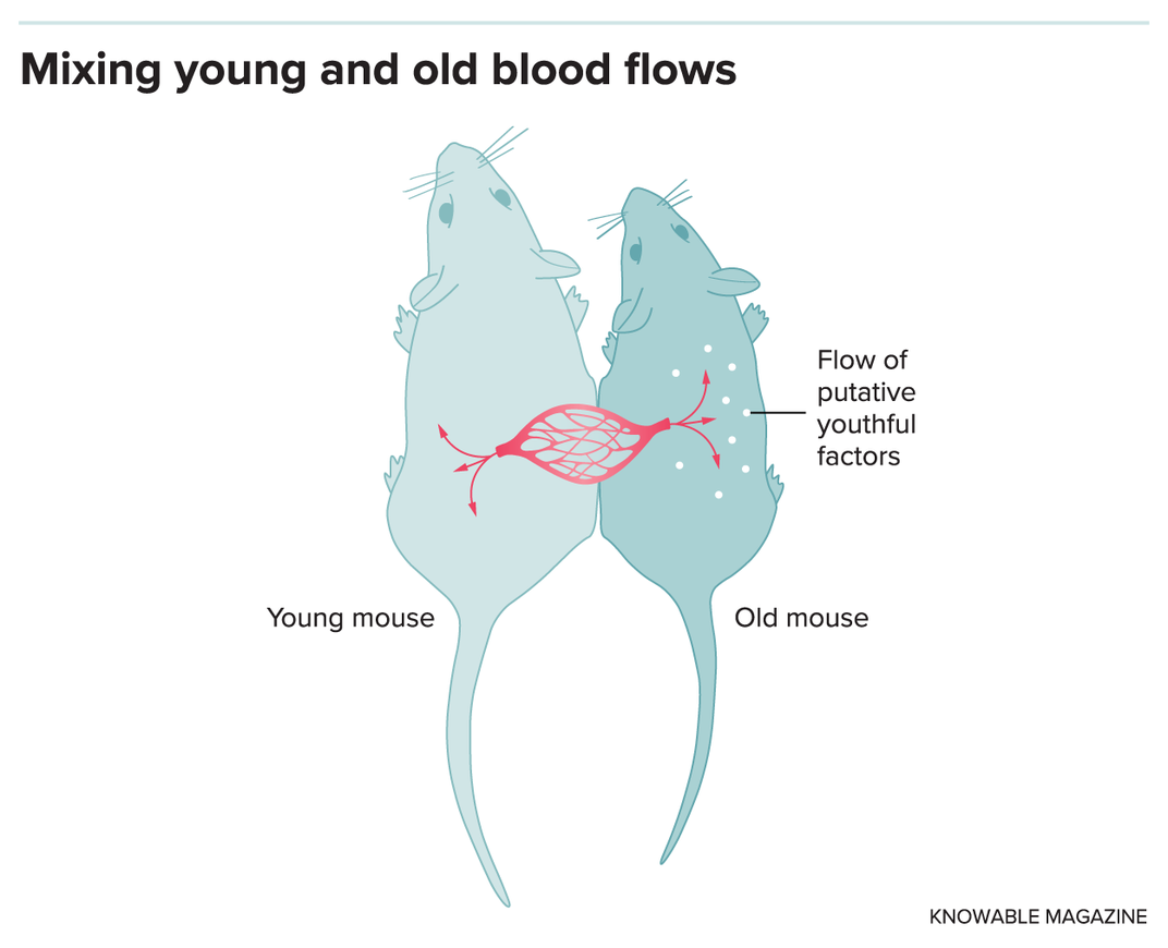 In the Search to Stall Aging, Biotech Startups Are Out for Blood