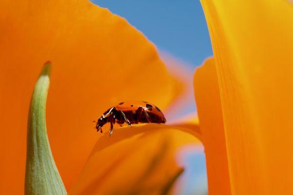 Lady In Orange thumbnail