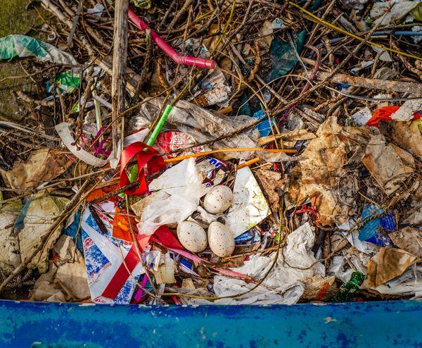 Trash or Treasure? thumbnail