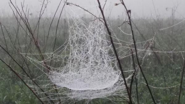 Spider's Schooner thumbnail