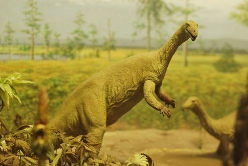 20110520083320Plateosaurus-NMNH.jpg