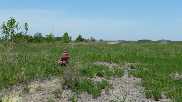 Fire hydrant in abandoned field thumbnail
