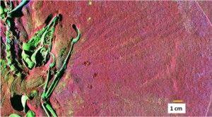 20110520083222Archaeopteryx-SRS-XRF-300x166.jpg