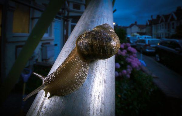 Scaffolding Snail thumbnail