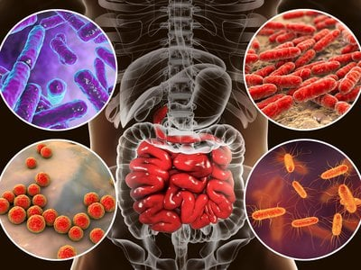 Scientists studying bacteria in the gut continue to find evidence of the role these organisms play in human health.