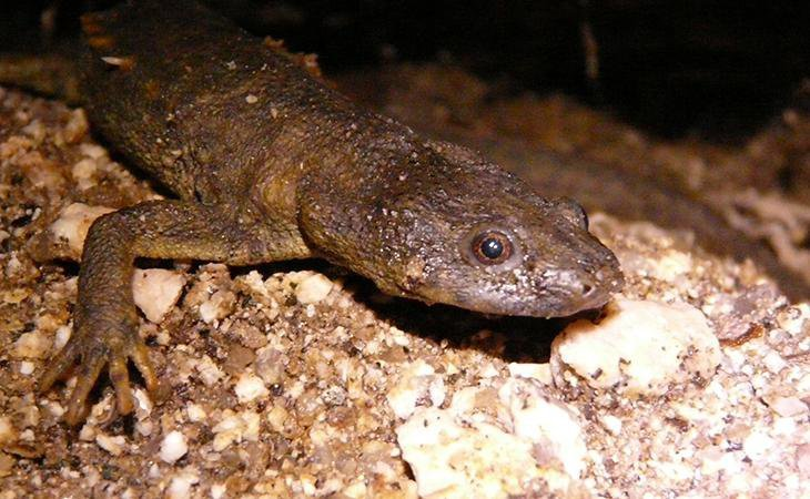 What's the Difference Between Poisonous and Venomous Animals?