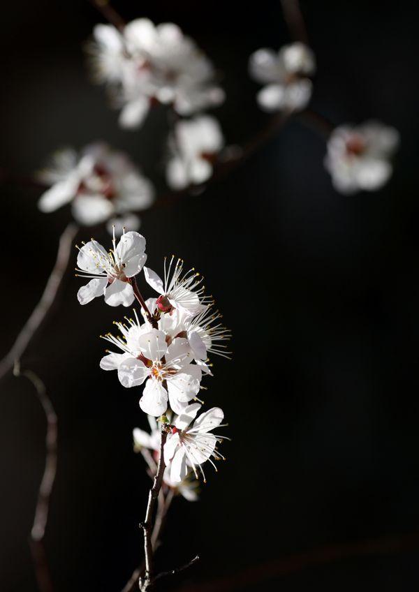 Spring Flowering thumbnail