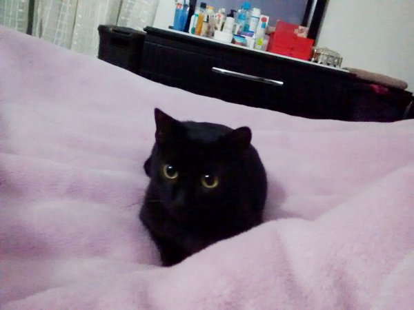 Black Cat in Bed thumbnail
