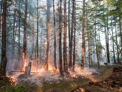 A forest fire in central Yakutia (Sakha Republic).