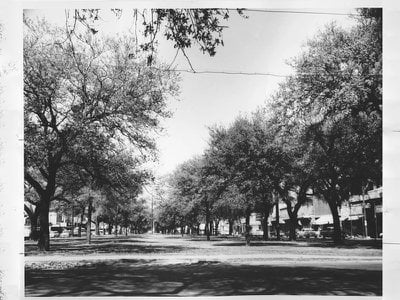 Before the highway's construction, Claiborne Avenue was known for its towering oaks.