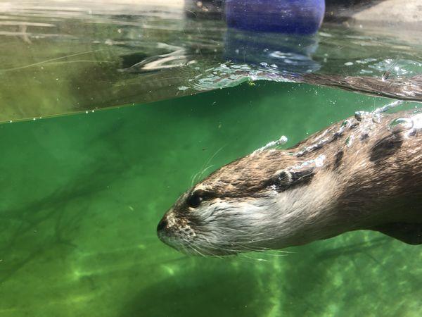 Otter Purpose thumbnail