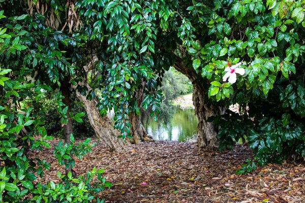 Hibiscus flower gateway thumbnail