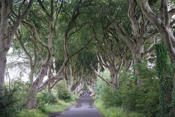 Dark Hedges in Northern Ireland thumbnail