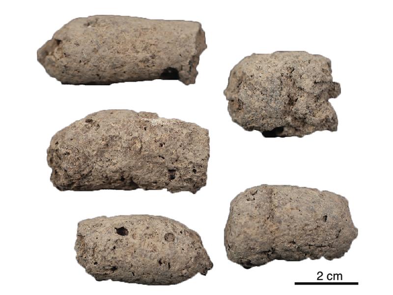 Ancient dog feces