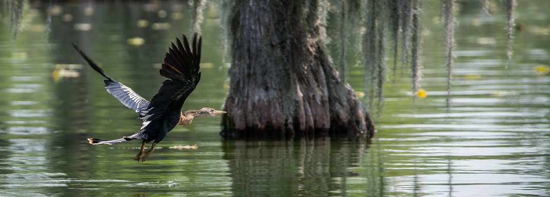 The 40 Best Places to Explore Louisiana's Southern Wilds