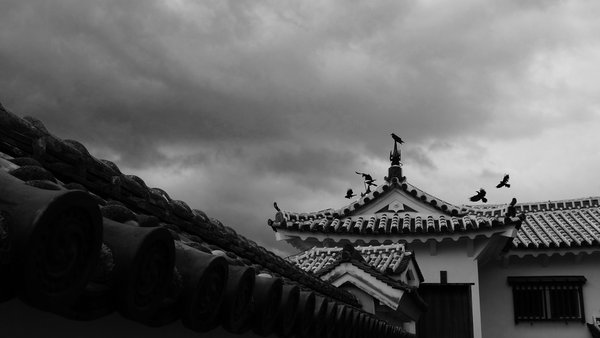 Crows on the outer wall at Himeji Castle thumbnail