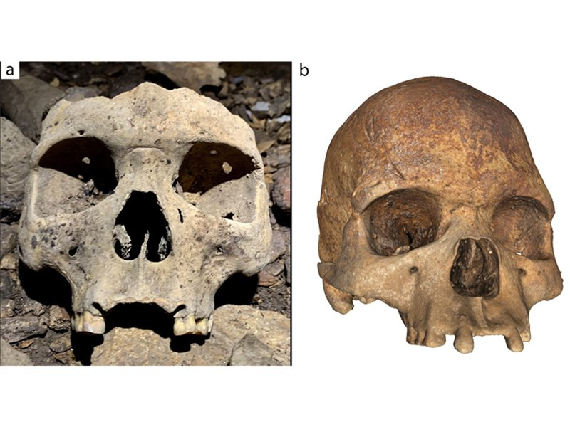 Two skulls with their front teeth removed