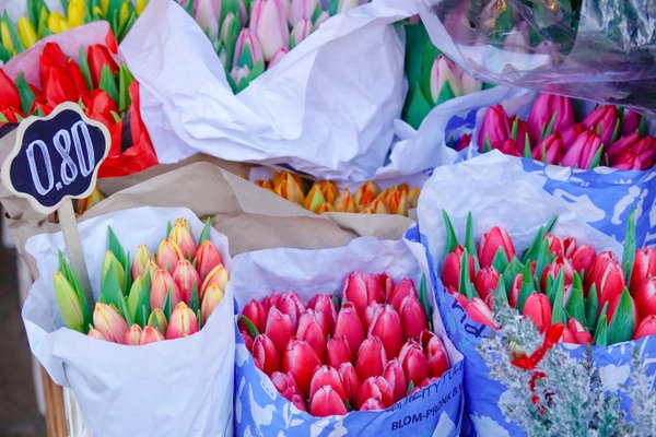 Stallholder selling tulips in Tallin´s Medieval Old Town thumbnail