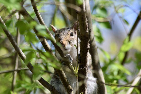 Sneaky Squirrel thumbnail