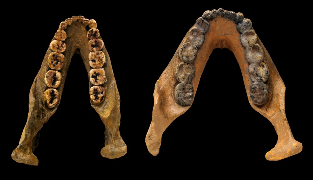 How Ancient Teeth Reveal the Roots of Humankind