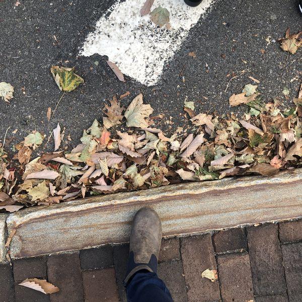 Fall in Bear Mountain thumbnail