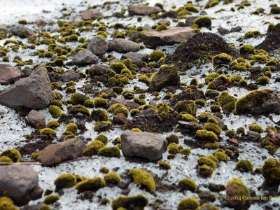 Glacier mice are balls of moss found in parts of Alaska and Iceland.