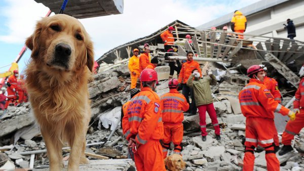 Preview thumbnail for Ask Smithsonian: Can Animals Predict Earthquakes and Other Natural Disasters?