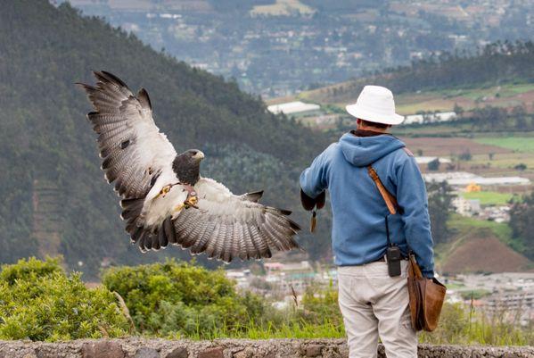 Harpy Eagle and Trainer, Condor Rescue Park, Otavalo, Ecuador thumbnail