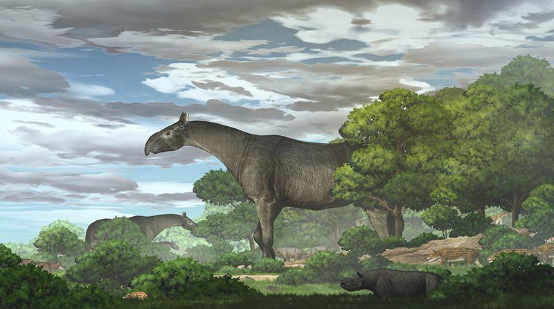 An artist representation of what a giant rhino may have looked like within its ecosystem during the Oligocene era