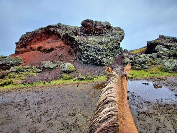 Riding an Icelandic horse through lava fields. thumbnail