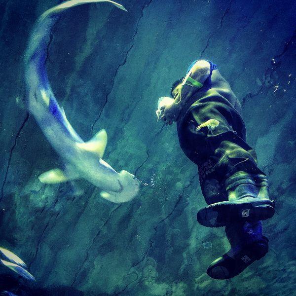 Shark feeding at the Aquarium. thumbnail