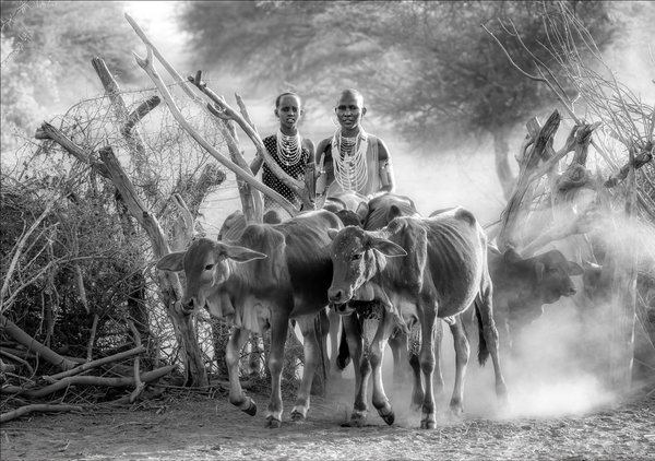 Female Maasai Shepherds thumbnail